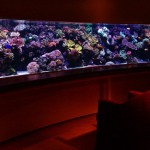 The 25 Most Extreme Aquariums in the World