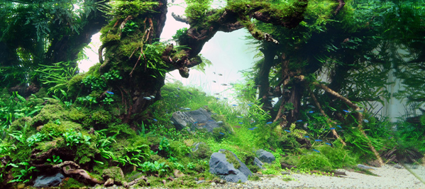 The Products And Techniques Developed By Mr. Amano Has Revolutionized The  Field Of Aquascaping. Here Are Just A Few Of His Amazing Designs: