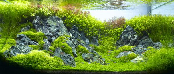 Takashi Amano - Photographer and eXtreme Aquarist