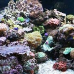 My LFS - Southwest Reef Company
