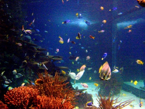 This is a guest post by Nikki of Reef?d Up Aquatics .
