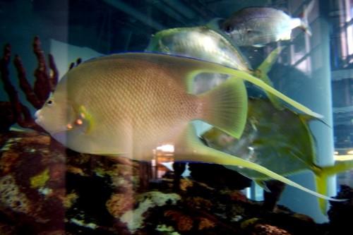 The south carolina aquarium for South carolina freshwater fish