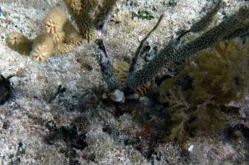 Sea Slug Eating Gorgonian